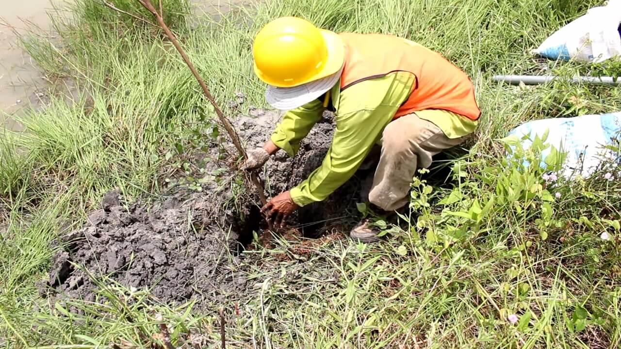 Wiraland Awali Tahun 2019 Tanam Ribuan Pohon Ketapang Berkelanjutan!