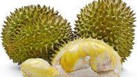 Berbagai Macam Olahan Kuliner dari Durian Medan
