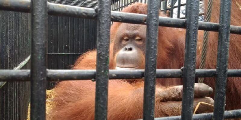 Kebun Binatang Medan Zoo